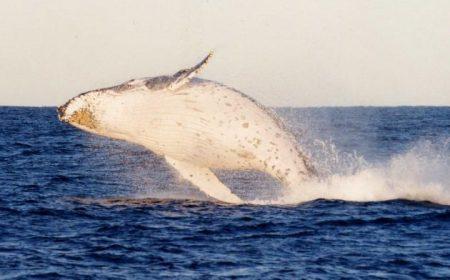 activitie_humpback-port-stephens-nsw
